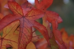 Fall Leaves<p>Image: <a href=