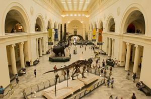 Dinosaur exhibits at The Field Museum (Photo credit: Jason Lindsey)